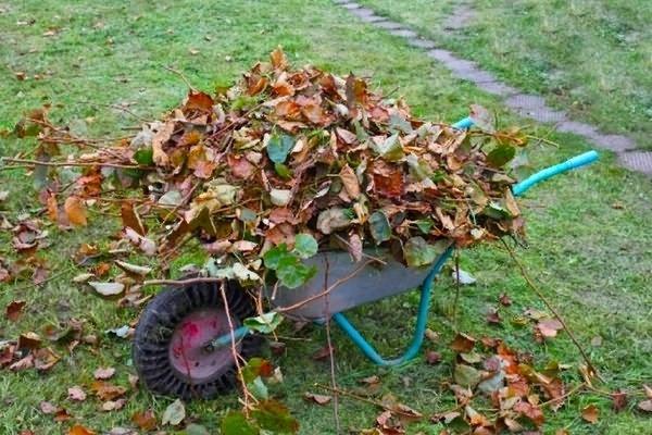 уход за клубникой осенью подготовка к зиме