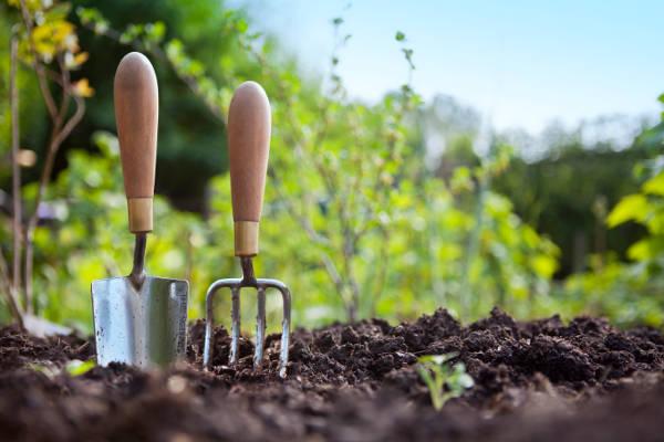 подкормка клубники осенью удобрениями