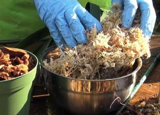 как пересаживать орхидею в домашних условиях грунт