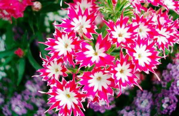 какие семена цветов сажать в марте