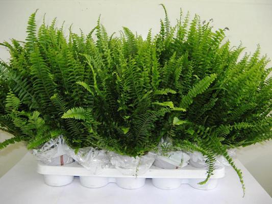 группы растений комнатных