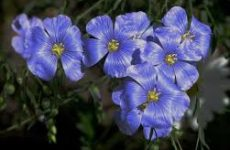Самые неприхотливые цветы для клумбы