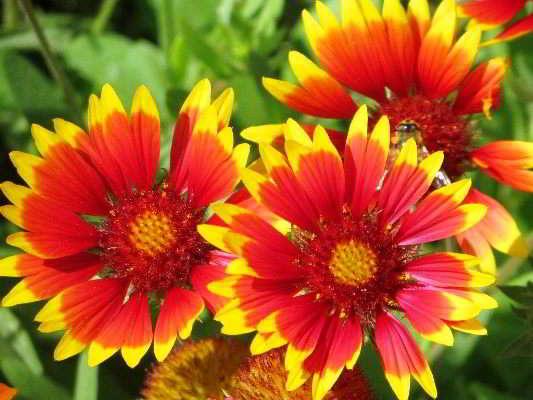 какие цветы сажать на рассаду в марте многолетники