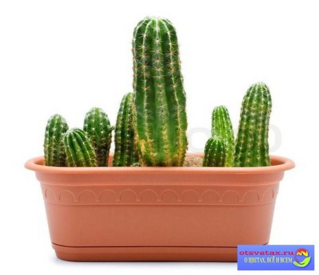 горшок для кактусов длинный купить