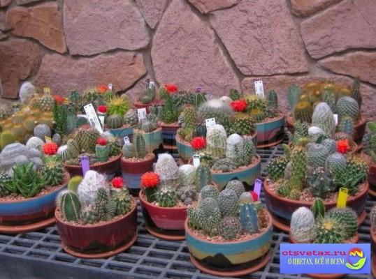 фото горшки для кактусов