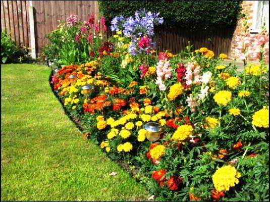 групповые посадки цветов на даче