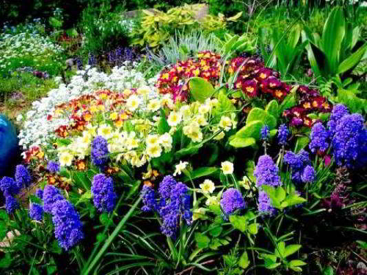 групповые посадки цветов