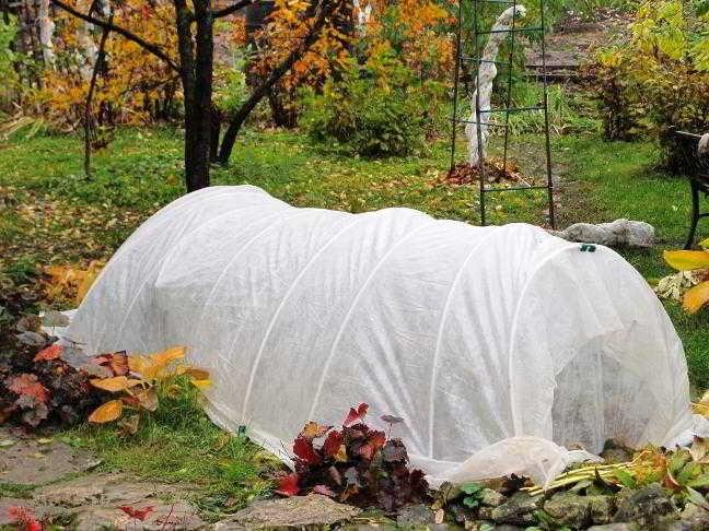как подготовить розы к зиме в средней полосе россии