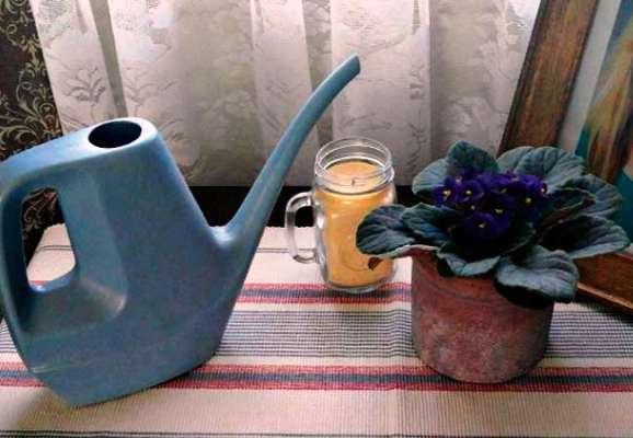 как поливать фиалки дома по сезонно