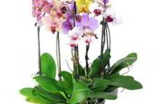 Как правильно ухаживать за домашней орхидеей