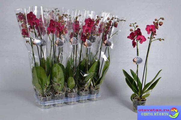 как выбрать орхидею в магазине