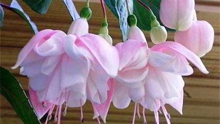Какой комнатный цветок выбрать и купить для дома, квартиры