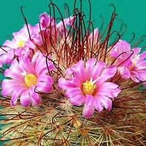 Виды кактусов фото и названия