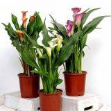 красивые комнатные цветы фото и названия цветущие весь год