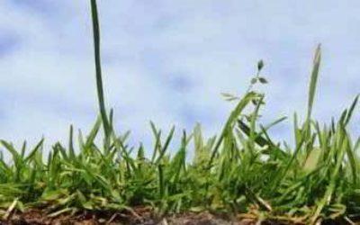 Кислотность почвы: как определить самому?
