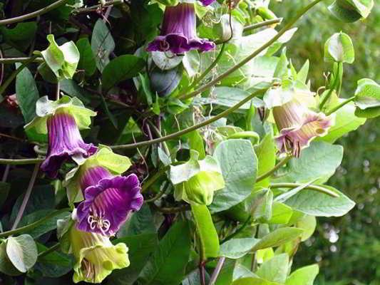 какую рассаду цветов сажают в марте дома