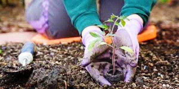 когда можно сажать семена помидор на рассаду в 2018 году