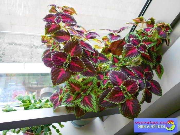 цветы в квартире фото интерьера