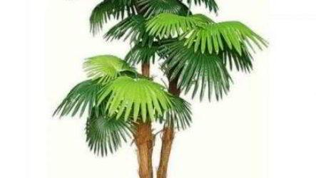 Какую пальму лучше выбрать для выращивания дома
