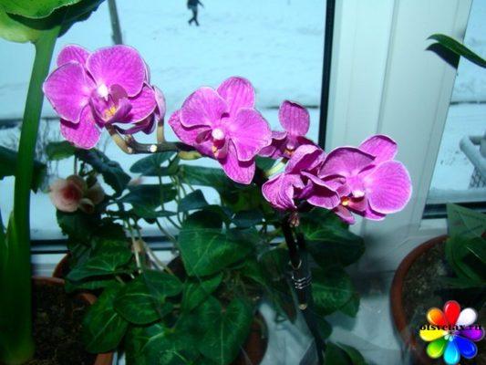 комнатные цветы уход зимой
