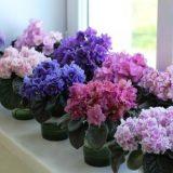 цветущие домашние цветы фото с названиями