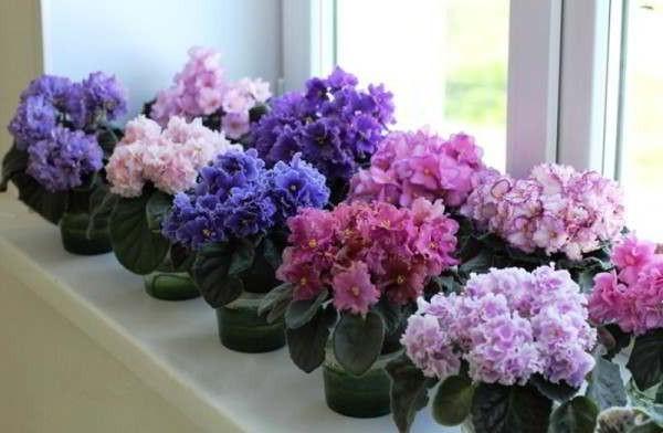 цветы комнатные цветы фото