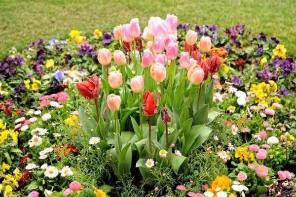 посадка тюльпанов осенью на урале видео