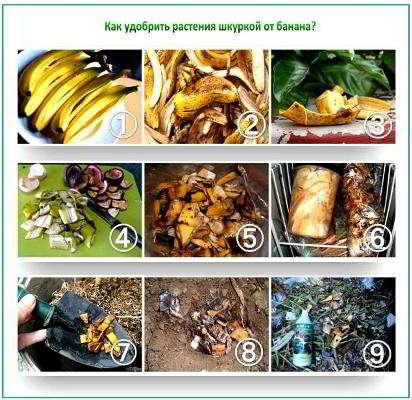 банан удобрение для растений