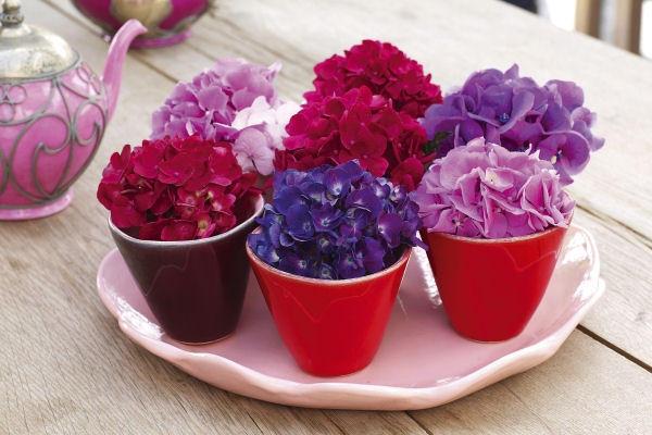 гортензия полив для цвета