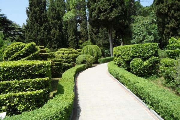 какие декоративные кустарники можно посадить на даче