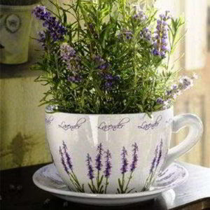 Как вырастить лаванду из семян в домашних условиях, когда и как сеять