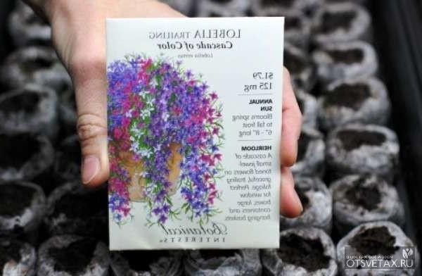 лобелия выращивание из семян в домашних условиях как и когда сеять