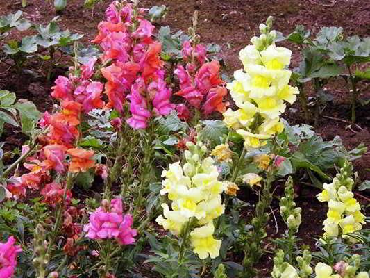какие цветы сажать в феврале марте