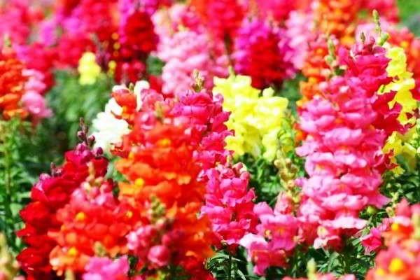 Какие цветы можно сажать в открытый грунт семенами 81