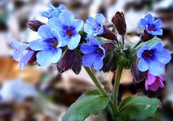 весенний цветок фото и название