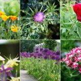 Цветы многолетники для сада