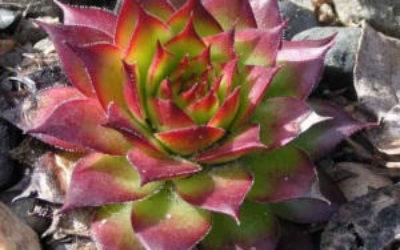почвопокровные цветы многолетники