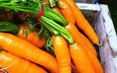 когда сажать морковь под зиму в 2016 году в подмосковье