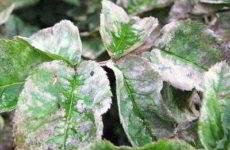 Болезни комнатных растений: причины и решение проблем