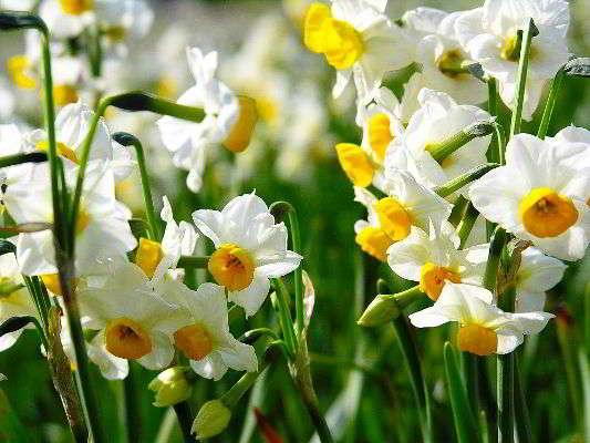 Фотографии цветов и букетов