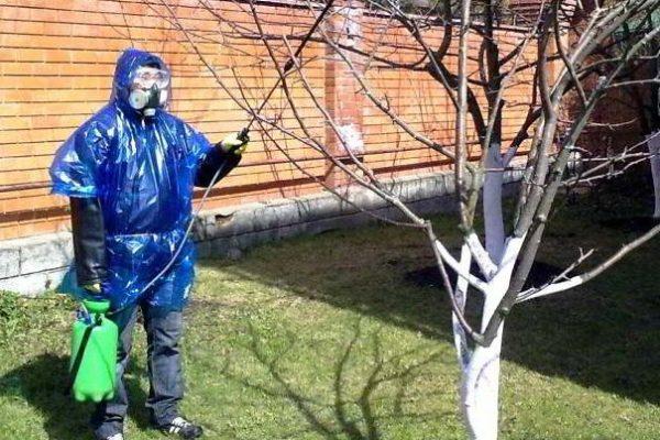 обработка сада осенью от вредителей и болезней серой гнили