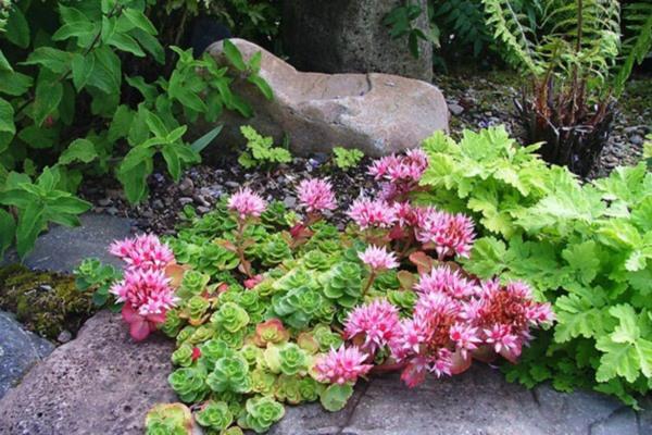 почвопокровные растения многолетники