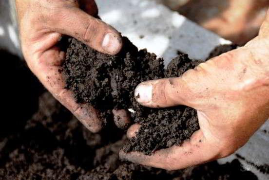 фрезия почва