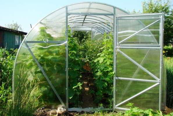 с чего начать выращивание огурцов в теплице ранней весной