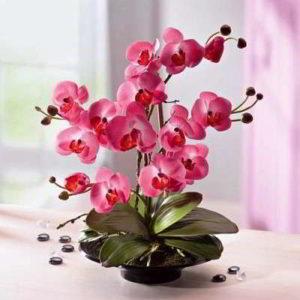 Правильный уход в домашних условиях за орхидеей в горшке