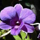 постоянно цветущие комнатные растения фото и название