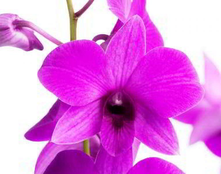 Орхидея уход в домашних условиях фото