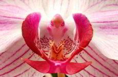 Знакомьтесь: орхидея — растение, покорившее мир
