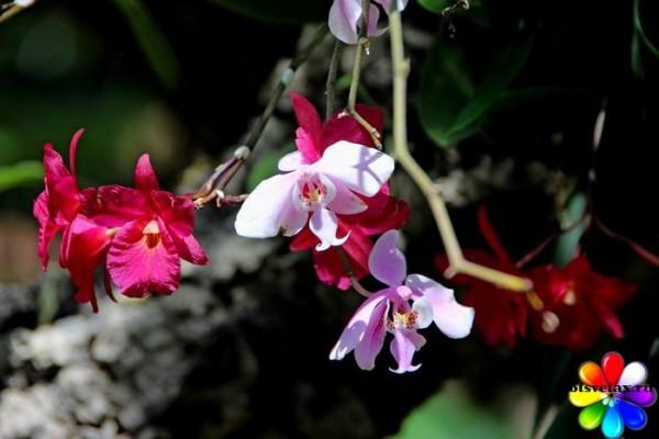 орхидея родина растения необходимый состав почвы