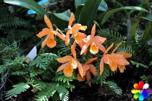 орхидея родина растения состав почвы